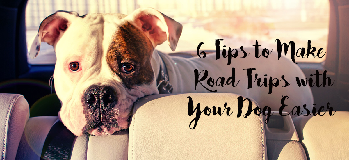 NowCar gives you tips for car road trips with your dog